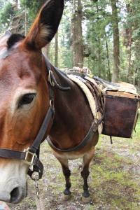 Mule6